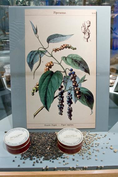 tropenmuseum-naturalist-poster