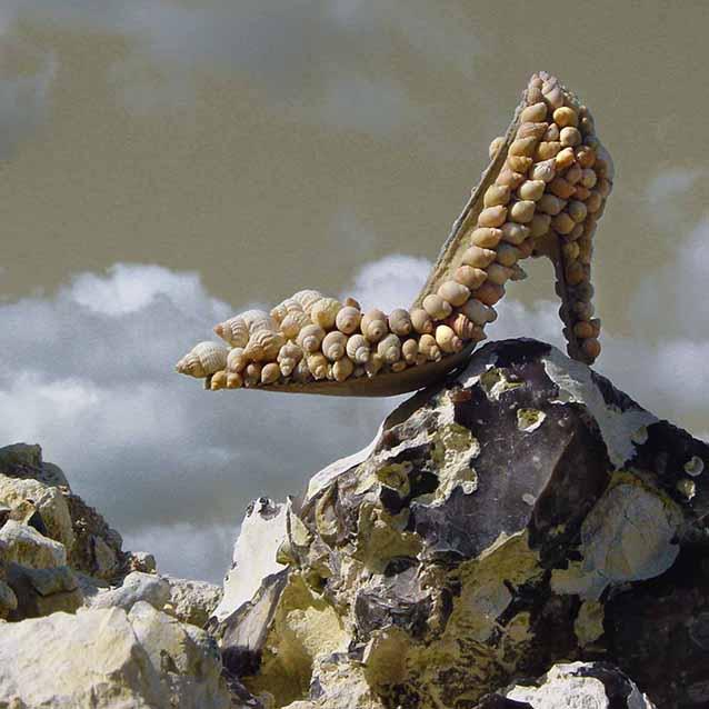 shell rock3